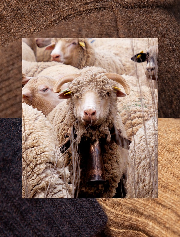 Mouton Pull Laine française Le Slip Français